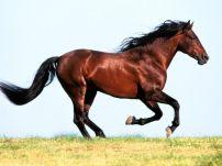 奔跑/奔跑的骏马