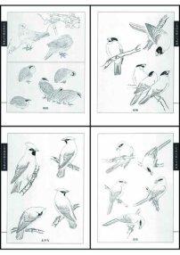 素材 线描/工笔画线描百鸟图...