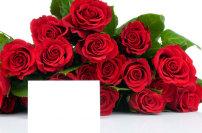 素材 卡片/红玫瑰与卡片高清图片素材
