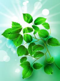 清新 绿叶/矢量素材枝叶绿叶