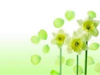 背景/淡雅绿色小花背景ppt模板