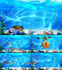 动态 美丽/美丽的海底世界鱼动态视频...