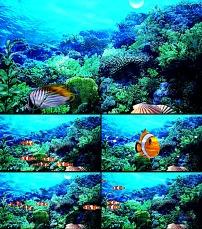 动态 珊瑚/美丽海底鱼视频高清动态视频下载