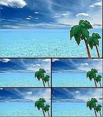 背景 飞鸽/大海椰子飞鸽背景视频素材