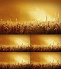 秋天 金色黄昏/秋天金色黄昏下的小草视频素材
