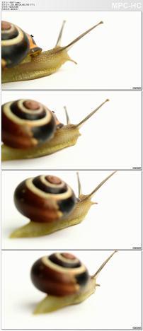 实拍蜗牛视频素材