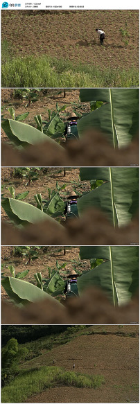 田间劳作的人们视频素材