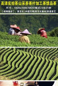 视频/高清实拍茶山采茶茶叶加工茶馆品茶视频