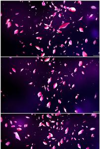 唯美花瓣飘落动态前景视频素材图片