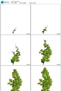 树枝叶子生长带透明通道视频素材图片