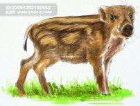 可爱的 野猪/可爱的小野猪