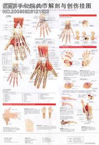 医院 解剖图/手和腕关节解剖图